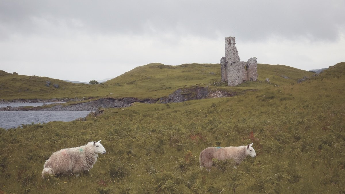 Versteckt in den Highlands - Ardvreck Castle